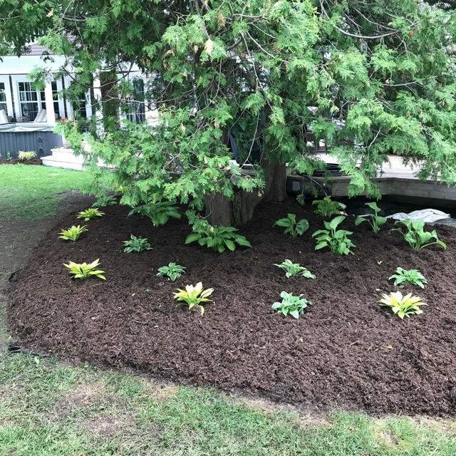 Mulched plant bed