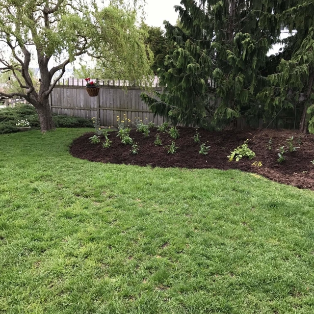Backyard plant bed