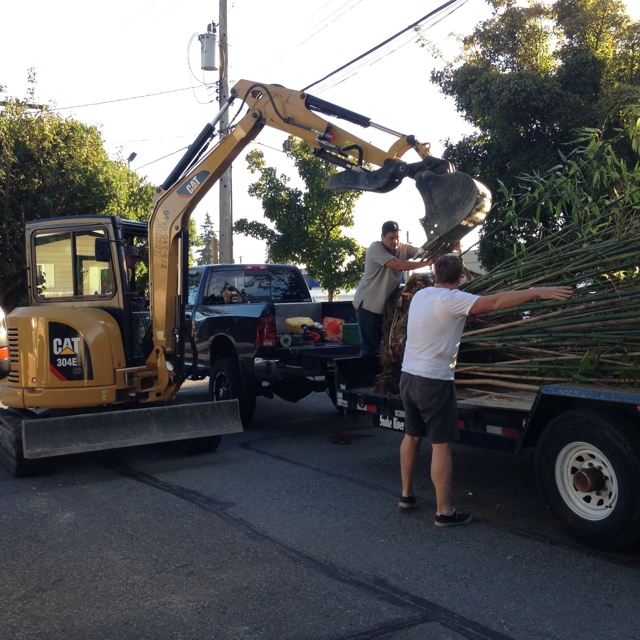 The Grounds Guys unloading bamboo from a trailer