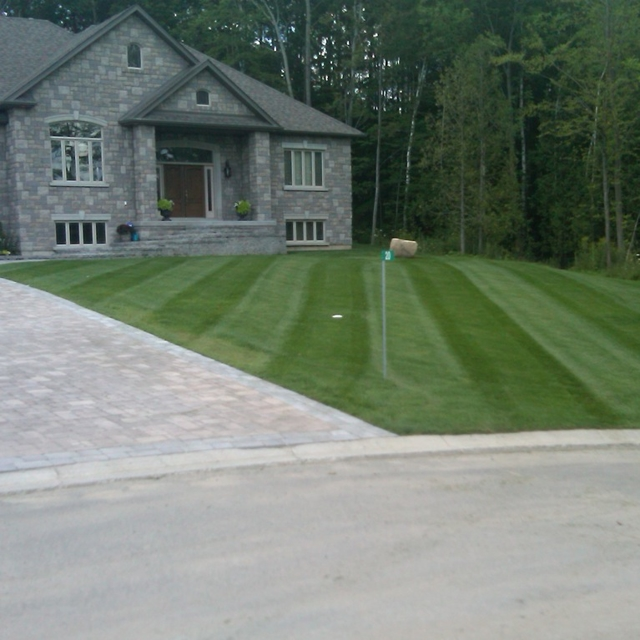 Mowed residential front lawn