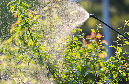 bushes being sprayed with water